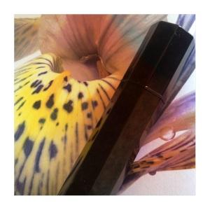 iris silver mist for blog