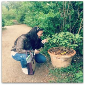 Stephanie Edit - Smelling a patchouli tree (I'm crazy about this scent!) in the gardens of MIP (International Perfumery Museum) May