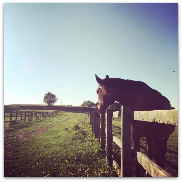 Liz Horse