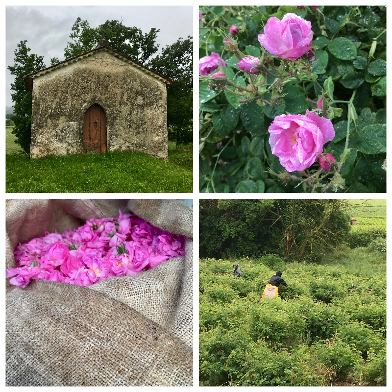 Collage Rose 2